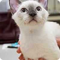 Adopt A Pet :: Blake - Irvine, CA