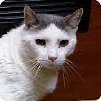 Adopt A Pet :: Twist - Atlanta, GA