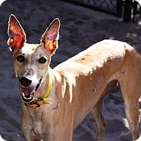 Adopt A Pet :: Vision - West Palm Beach, FL