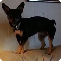 Adopt A Pet :: Sapphire - Elkhart, IN