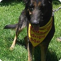 Adopt A Pet :: Primrose - Louisville, KY