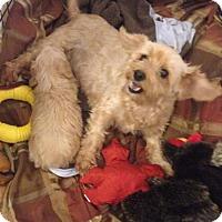 Adopt A Pet :: Aurora - Maricopa, AZ