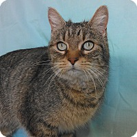 Adopt A Pet :: Jinx - Larned, KS