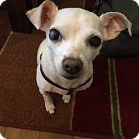 Adopt A Pet :: BJ - Salem, OR
