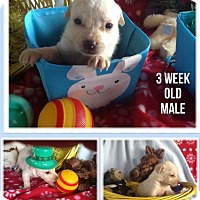 Adopt A Pet :: Austin - springtown, TX