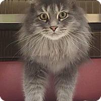 Adopt A Pet :: Misty - McKinney, TX