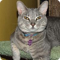 Adopt A Pet :: Purrl - Burbank, CA