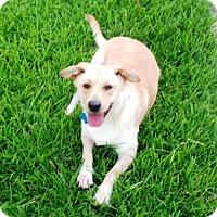 Adopt A Pet :: Story - Houston, TX