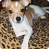 Adopt A Pet :: Meenie Mouse - Oswego, IL
