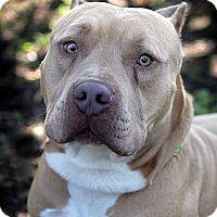 Adopt A Pet :: Arthur - Berkeley, CA