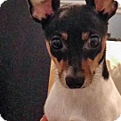Adopt A Pet :: Baby Girl (& Bonnie)