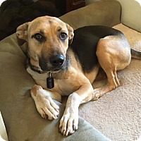 German Shepherd Dog Mix Dog for adoption in Penngrove, California - Berry