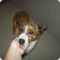 Adopt A Pet :: *SHEILA - Bakersfield, CA