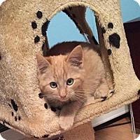 Adopt A Pet :: Ryan - Hudson, NY