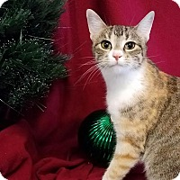 Adopt A Pet :: Faith - Colfax, IA