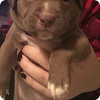 Adopt A Pet :: 6 pups 4F 2M - Albemarle, NC