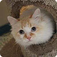 Adopt A Pet :: Elsa - Yucaipa, CA