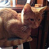 Adopt A Pet :: Sunny - East Hanover, NJ