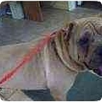 Adopt A Pet :: Jaxson - Bethesda, MD