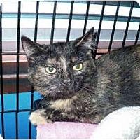 Adopt A Pet :: Queenie - Colmar, PA