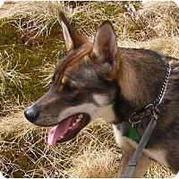 Adopt A Pet :: Titus - Rigaud, QC