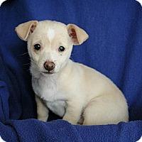 Adopt A Pet :: Kim - Sacramento, CA
