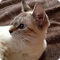 Adopt A Pet :: Bright Eyes - Bradenton, FL