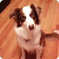 Adopt A Pet :: Abby Rose - Washington, IL