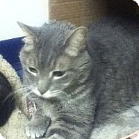 Adopt A Pet :: Kenai - Colorado Springs, CO