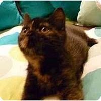 Adopt A Pet :: Brenda - Beverly Hills, CA