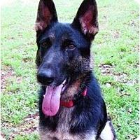 Adopt A Pet :: Sadie - Staunton, VA