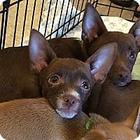 Adopt A Pet :: Tucson - Phoenix, AZ