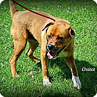 Adopt A Pet :: Chance - Vancleave, MS
