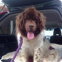 Adopt A Pet :: Nana - Stafford Springs, CT