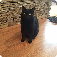 Adopt A Pet :: Trouble - Laguna Woods, CA