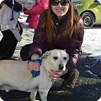 Adopt A Pet :: Toby - adoption pending - Norwalk, CT