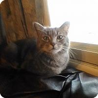 Adopt A Pet :: Maggie #2 - Fairborn, OH