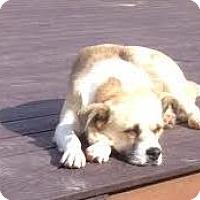 Adopt A Pet :: Ally - San Diego, CA