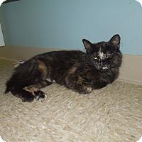Adopt A Pet :: Isabella - Medina, OH
