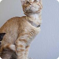 Adopt A Pet :: Lee - Colorado Springs, CO