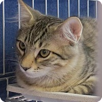 Adopt A Pet :: Fir - Raritan, NJ