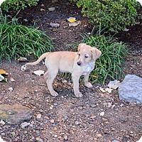 Adopt A Pet :: Oslo - Ijamsville, MD