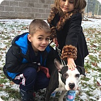 Adopt A Pet :: Camilla - Bloomfield, CT