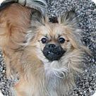 Adopt A Pet :: Rosco