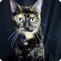 Adopt A Pet :: Tangerine - Bradenton, FL