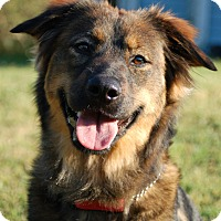 Adopt A Pet :: Crystal - Ormond Beach, FL