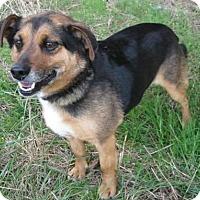 Adopt A Pet :: Conner - Huntsville, AL