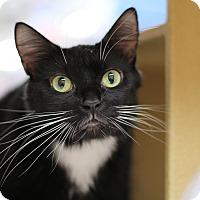 Adopt A Pet :: Marie - Richmond, VA