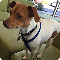 Adopt A Pet :: Cookie - Greenfield, WI