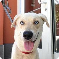 Adopt A Pet :: Breeze-I'm an Adoption Center Dog! - Chicago, IL